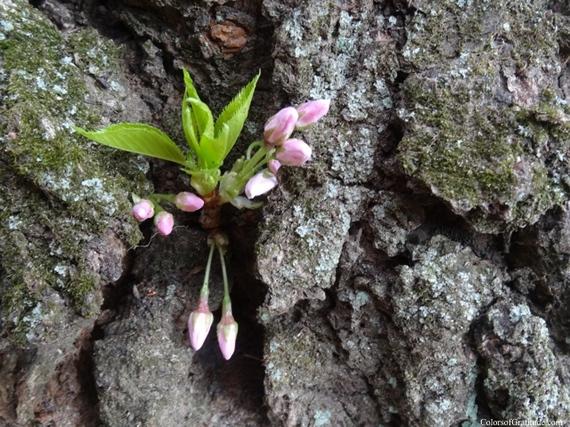 2015-04-26-1430057454-7876609-blossombliss_11.jpg