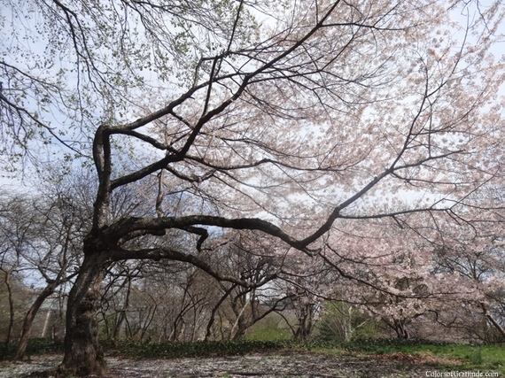 2015-04-26-1430057478-5821422-blossombliss_14.jpg