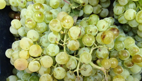 2015-04-27-1430175888-5751885-grapes.JPG