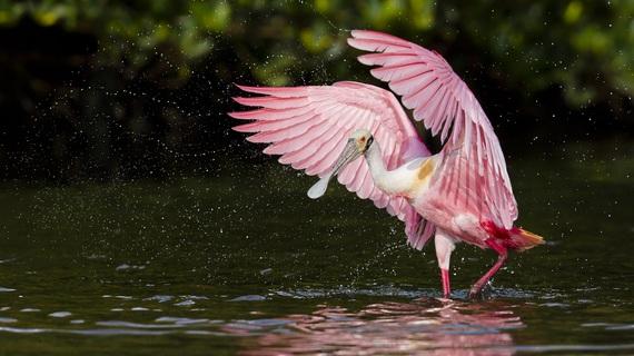 2015-05-01-1430502876-451726-bird_GettyImages514628677_resized.jpg
