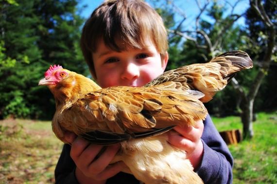 2015-05-06-1430928231-7323967-chickens1.jpg
