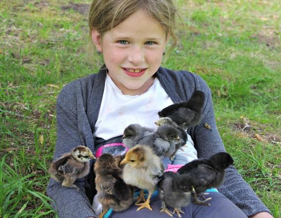 2015-05-06-1430928288-454851-chickens2.jpg