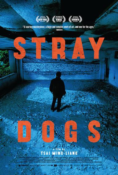 2015-05-06-1430931868-9805294-straydogs.jpg
