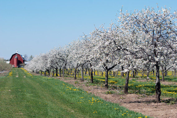 2015-05-07-1430992911-8110492-door_county_cherry_blossoms.jpg
