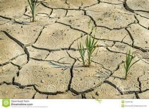 2015-05-07-1431010132-5601537-droughtfarmfield.jpeg