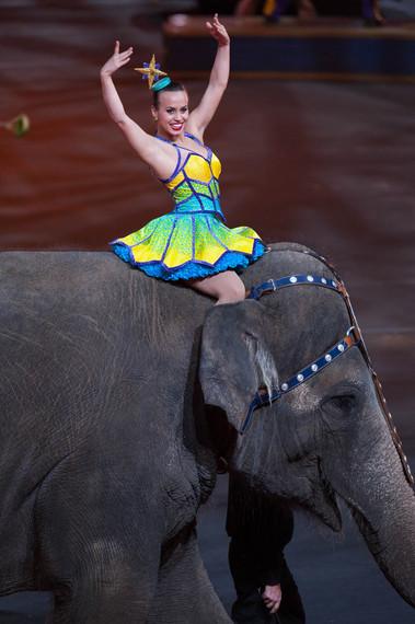 2015-05-08-1431104239-5507483-Alves_Elephant.jpg