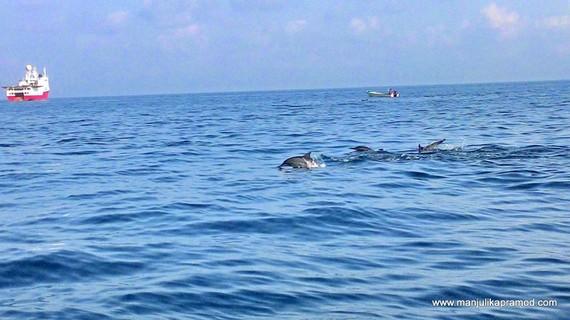 2015-05-09-1431157723-1628578-DolphinwatchingoffthecoastofMuscat.jpg