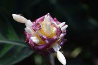 2015-05-10-1431280455-7629142-Flower.jpg