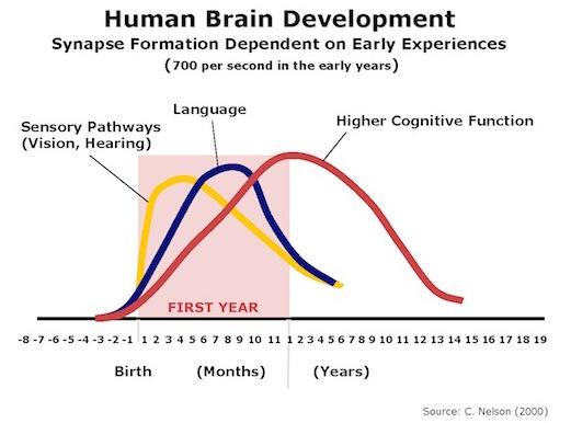 2015-05-20-1432094790-1655868-HumanBrainDevelopment.jpg