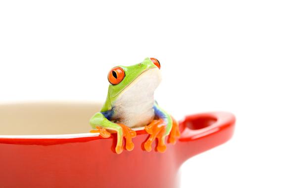 2015-05-20-1432095016-1552072-Frog.jpg