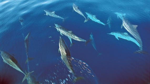 2015-05-21-1432219394-4411441-DolphinsvisitQuilalea.jpg
