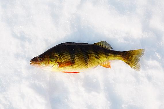 2015-05-21-1432232135-5311846-SCHROON_LAKE_ICE_FISHING_1543.jpg