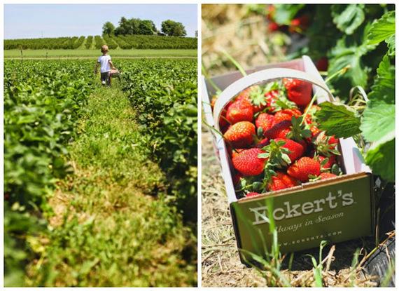 2015-05-22-1432338045-6166472-FinderyStLuisStrawberries.jpeg