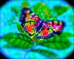 2015-05-23-1432340805-4727689-Butterfly.1.enhanced.blurred.2.jpg