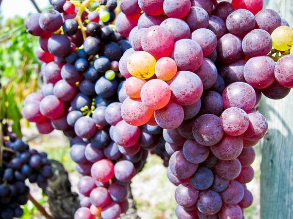 2015-05-23-1432406283-2346574-Grapes.jpg