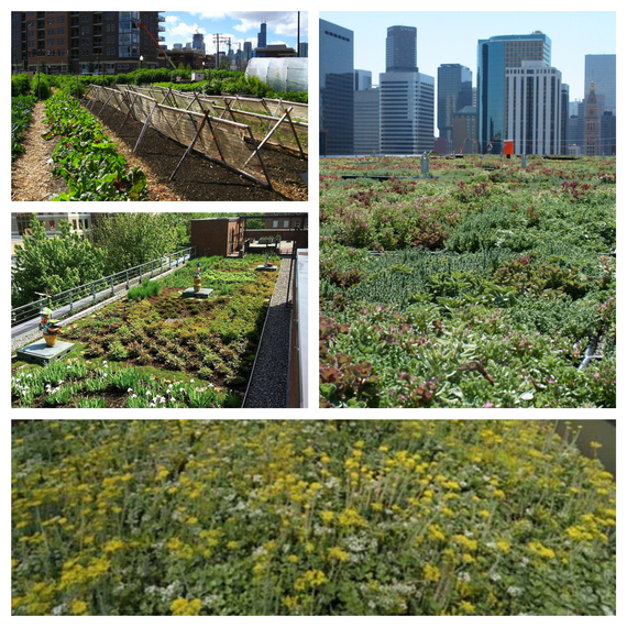 2015-05-26-1432637917-4633952-rooftopagriculture.jpg