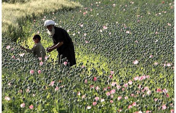 2015-05-26-1432672523-9159275-Afganharvestingo_1396922i.jpg