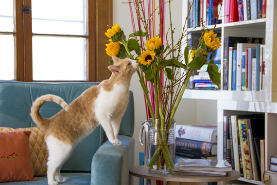 2015-06-02-1433277761-718311-Pets_Flowers.png
