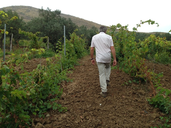 2015-06-03-1433329913-1669058-vineyardMarco.JPG