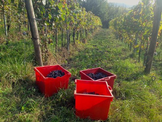 2015-06-03-1433330183-6600485-vineyardbuckets.JPG