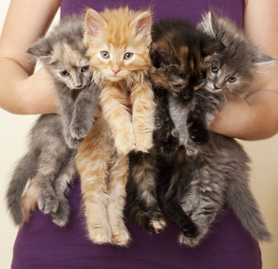 Cat lady online hookup video profiles