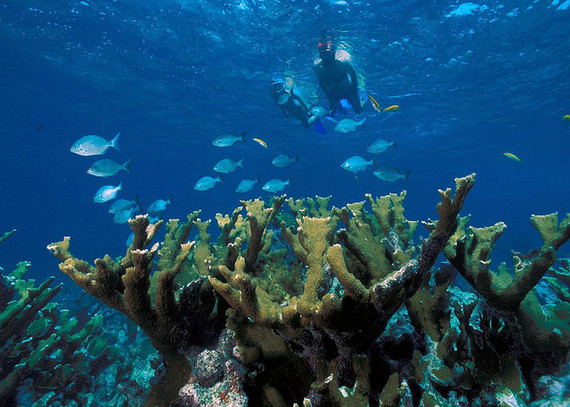 2015-06-08-1433770449-2055884-SnorkelersswimaboveElkhornReefinBiscayneNationalParkPhotoCredit_NationalParkService.jpg