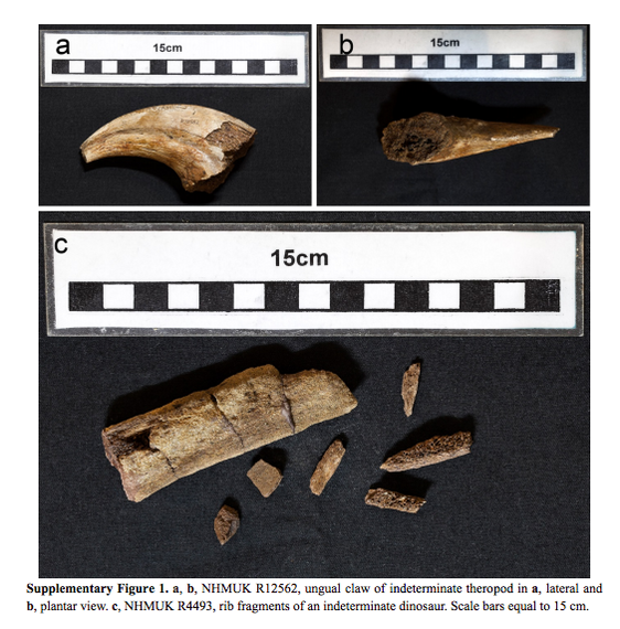 2015-06-10-1433950611-212911-FossilFragmentViaNatureCommunications.jpg