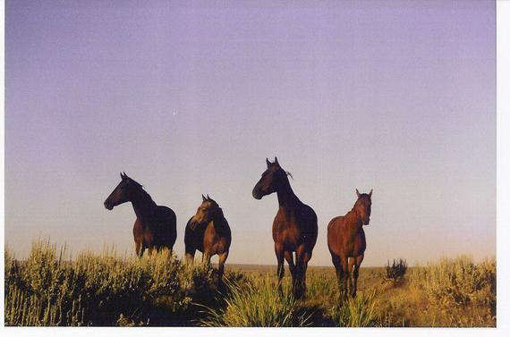 2015-06-11-1434035425-8191738-HorsesDontGetDivorcedcopy.jpg