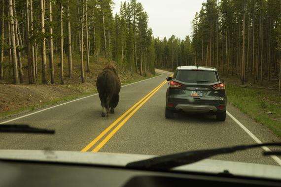 2015-06-13-1434222107-7048833-buffalointhestreet.jpg