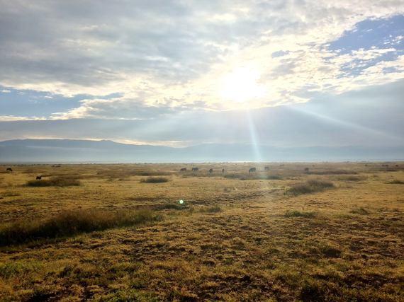 2015-06-16-1434423762-909292-Serengeti2.jpg