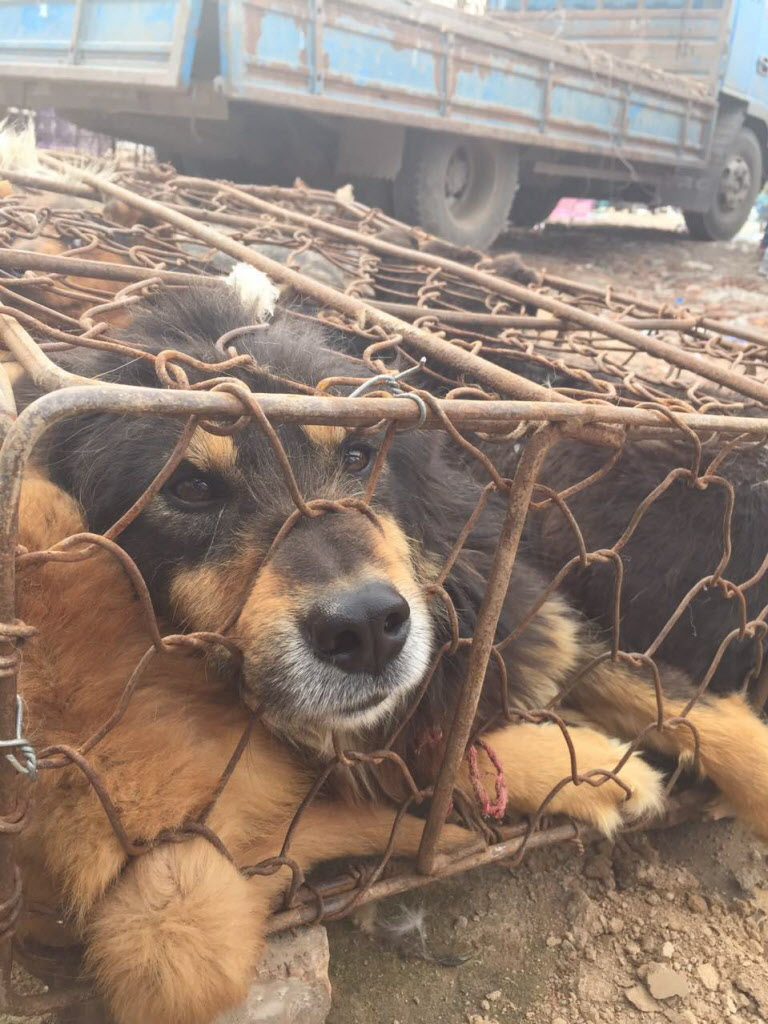 Yulin Dog Festival Video