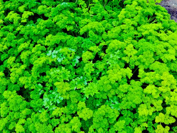 2015-06-16-1434472764-1647672-Herbs.jpg
