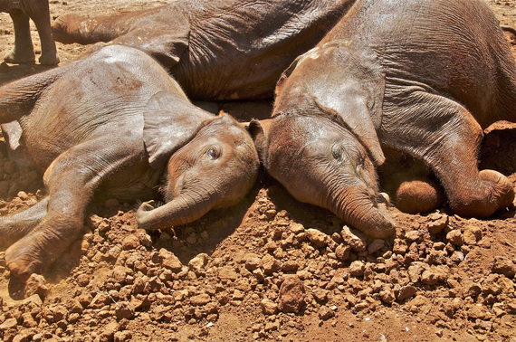 2015-06-18-1434649616-8760538-Babyelephants_35724042.jpg