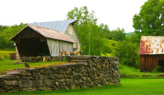 2015-06-19-1434732457-5659452-VermontChickens.jpg