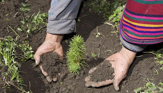 2015-06-19-1434738176-7436621-treeplanting.jpg