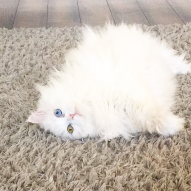 how to stop cats destroying carpet