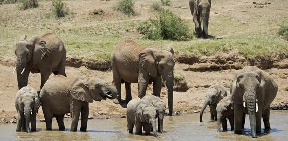2015-06-20-1434823171-2408281-elephantsMAHER2145x1050.jpg.jpg