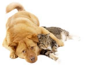 2015-06-23-1435061217-2368989-animalrights.jpg
