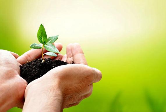 2015-06-23-1435080779-8188848-PlantMedicine.jpg