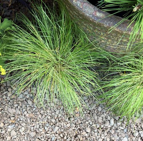 Mejores hortalizas para crecer a la sombra - Jardinería orgánica - NOTICIAS DE MADRE LA TIERRA