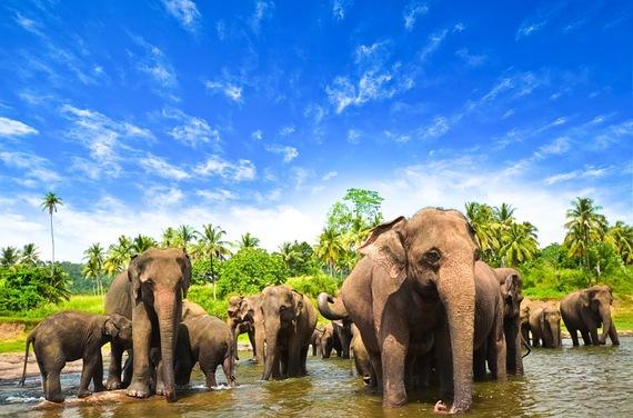 2015-06-25-1435241796-210341-SriLankaroomswithnssprivatetourMercuryDirectandBarefootTraveller.jpg