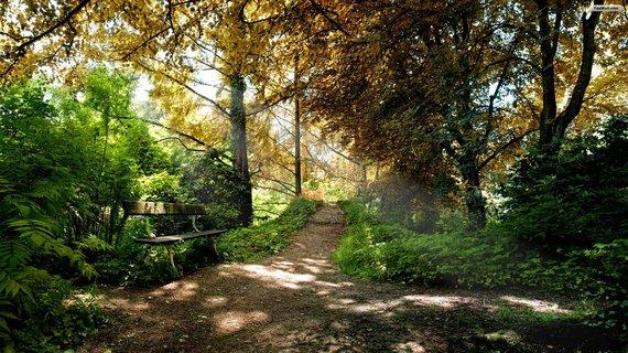 2015-06-25-1435244641-7663280-green_forest_path_wallpaper_764f5.jpg