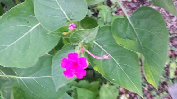 2015-06-25-1435266443-541846-Pinkflowerbest.jpg