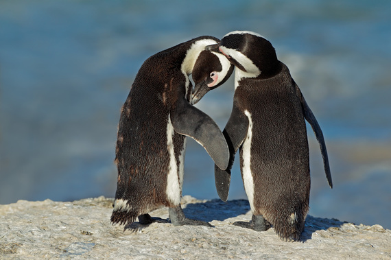 2015-06-30-1435644971-5018208-011817214africanpenguins.jpg