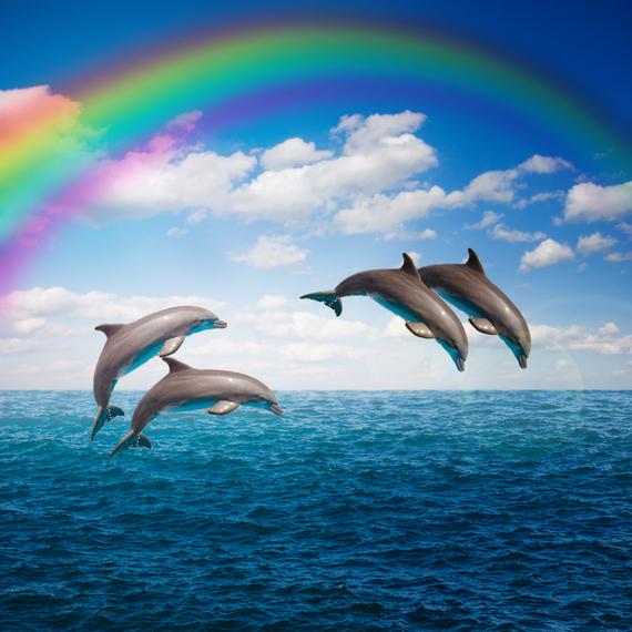 2015-06-30-1435645144-298885-047853079packjumpingdolphins.jpg