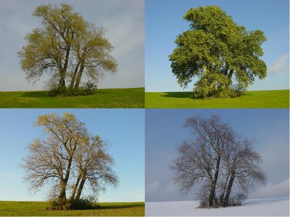 2015-06-30-1435684176-253118-Four_Poplars_in_four_seasonscommons.wikimedia.org.JPG