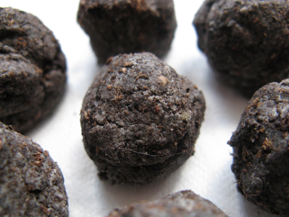2015-07-06-1436160945-3868159-Seed_Bombs_by_Kevan_Creative_Commons.png