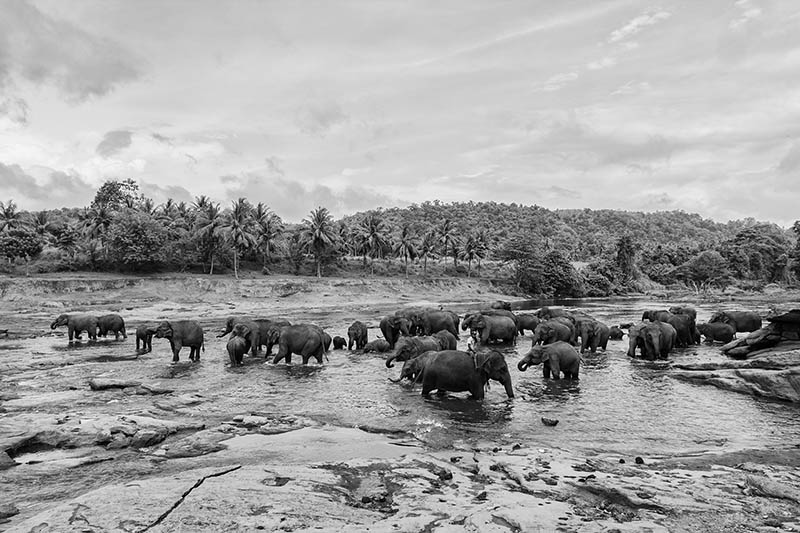 2015-07-10-1436531544-9155479-Elephant1.jpg
