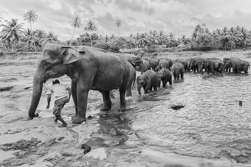 2015-07-10-1436531665-606040-Elephant2.jpg