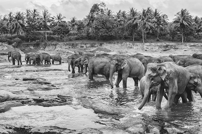 2015-07-10-1436531709-4442985-Elephant3.jpg